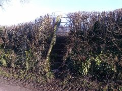 Repairs to steps and gate at Compton Martin, 20th January 2017 (Before)
