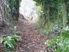 Clearing a path at the top of a bank near Stowey, 20th January 2017 (After)